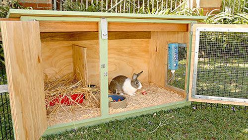 build a rabbit hutch for your bunnies to call home