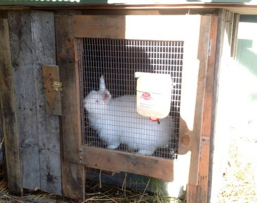 Diy Pallet Indoor And Outdoor Rabbit Hutch