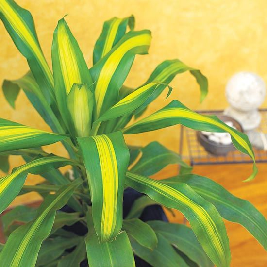 Identifying House Plants By Leaves