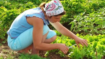 Deciding What to Plant in a Garden with Vegetables