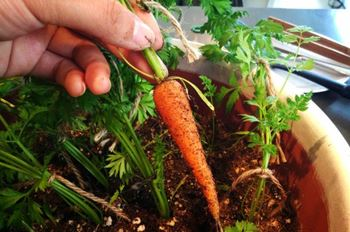 Grow Vegetables Indoors Without Sunlight