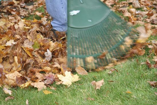 Remove matted leaves