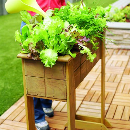 Small space salad box