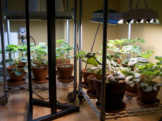 How to Grow Vegetables indoors without Sunlight