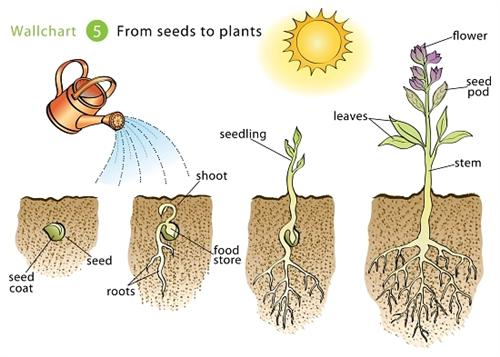 seeds for plants