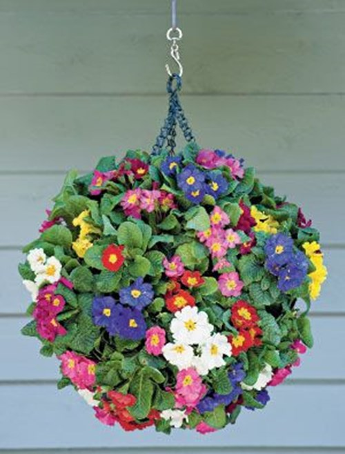 Hanging-Basket-Planter