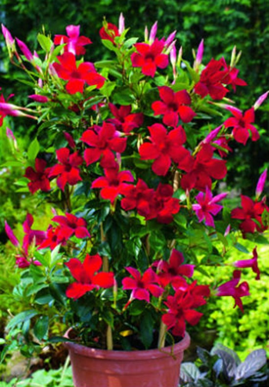 10 Best Full Sun Container Plants