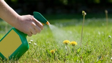 Effective Weed killers for lawns