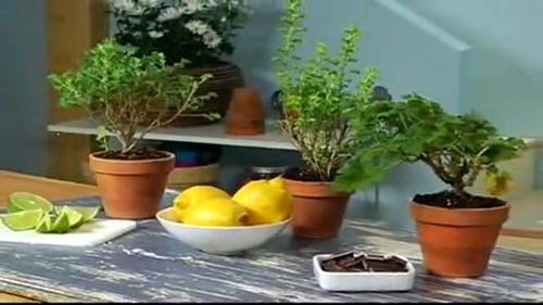 Grow a Fragrant Windowsill Spa