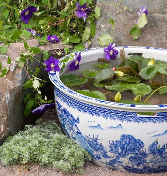 10 Container Water Garden Plants