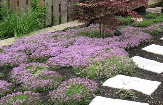 garden design with beautiful ground cover plants u better home gardening with landscaping ideas for flower - Ground Cover Ideas