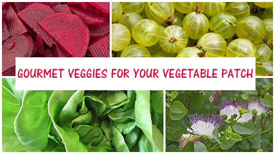 Gourmet-Veggies-for-Your-Vegetable-Patch