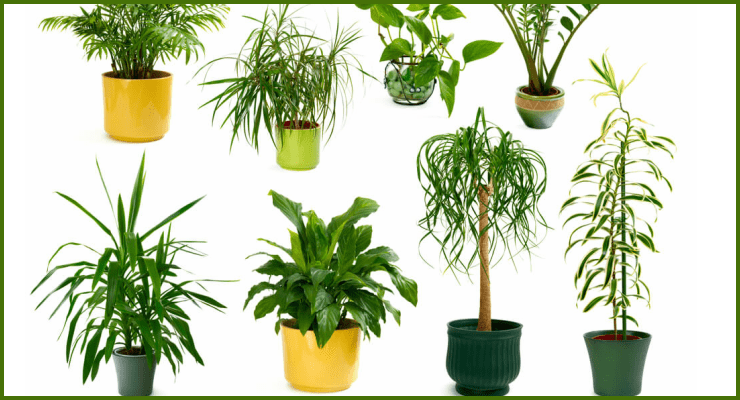 Tips for cork materials used in plants decoration - Indoor plants decoration ideas ...